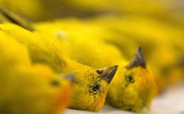 APTOPIX Brazil Smuggled Birds