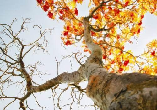 图片5. 树