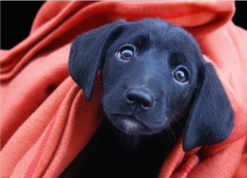 图片6. 小狗