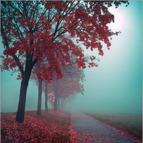 图片11. 红色的秋