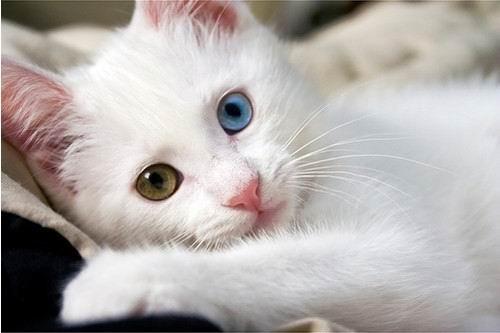 图片15. 猫