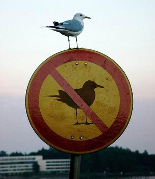 图片21. 路标上的海鸥