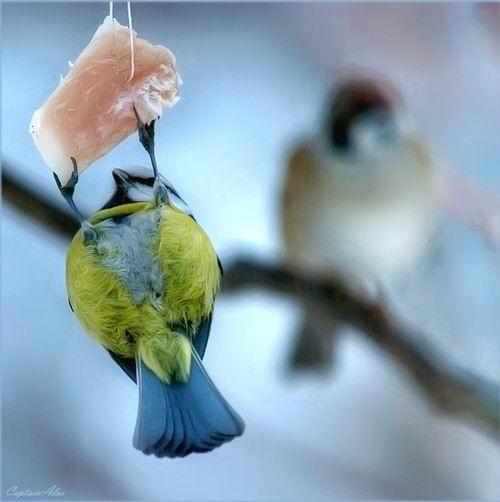 图片 鸟和肉