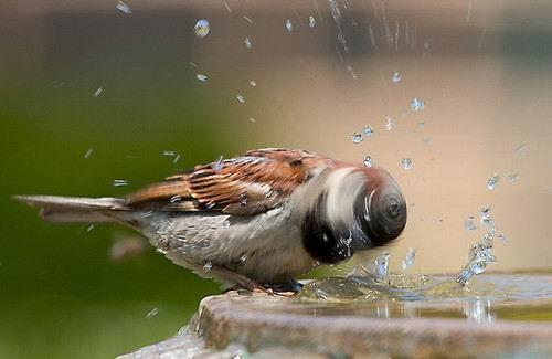 图片 鸟和水
