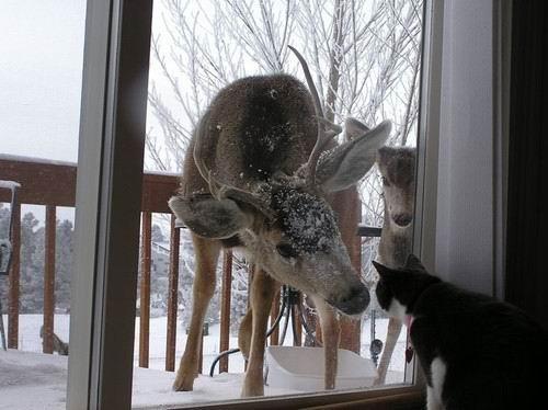 图片 猫和鹿